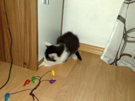 Foto 4 meine katze