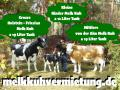 melk deko kuh vermieten und jetzt … ach du brauchst ja deko melk kuh modelle die du vermieten kannst ...