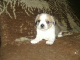 Foto 2 mini teddybär