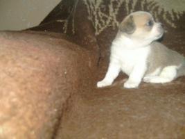 Foto 3 mini teddybär
