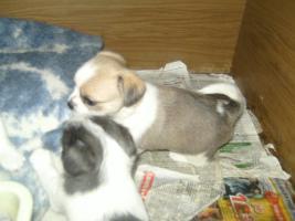 Foto 6 mini teddybär