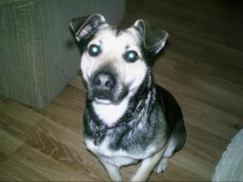 Foto 2 mischlingshund