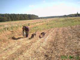 Foto 5 neuer Familienanschluss für 2-jährige Labrador-Mix-Hündin gesucht