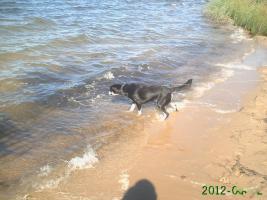Foto 7 neuer Familienanschluss für 2-jährige Labrador-Mix-Hündin gesucht