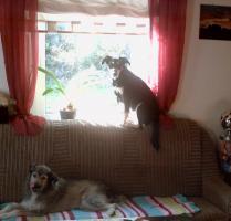 Foto 8 neuer Familienanschluss für 2-jährige Labrador-Mix-Hündin gesucht
