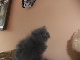 Foto 4 persebabys