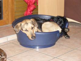 Foto 4 schäferhund mix in gute hände abzugeben !!!