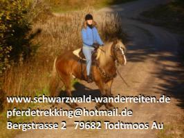 Foto 7 schwarzwald-wanderreiten, Reiten, Wanderreiten in Todtmoos, Urlaub für Outdoor-Fans