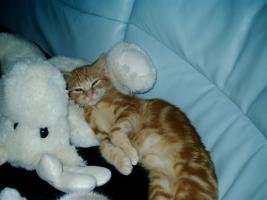 sehr verschmuste Katze in liebevolle Hände abzugeben