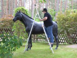 Foto 2 stell dir das deko pferd doch aufs dach ...