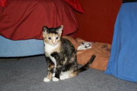suche neues zuhause für meine katze mit freigang!!!