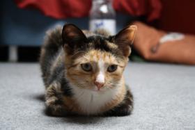 Foto 3 suche neues zuhause für meine katze mit freigang!!!