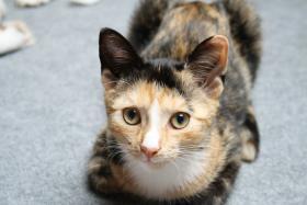 Foto 4 suche neues zuhause für meine katze mit freigang!!!
