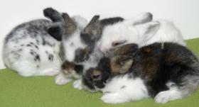 Foto 2 süsse Teddy-Kaninchen