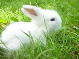 s e teddywidder kaninchen babys zu verkaufen in leipzig von privat. Black Bedroom Furniture Sets. Home Design Ideas