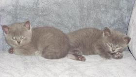 Foto 2 süsse kitten suchen zu hause!!