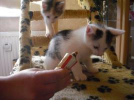 süße kleine katzenbabys