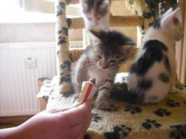Foto 3 süße kleine katzenbabys