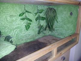 Foto 3 terrarium