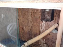 Foto 4 verkaufe terrarium komplett eingerichtet mit aquarienunterschrank, buche