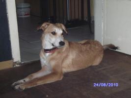 versch. Hunde aus Tötungsstation suchen Zuhause