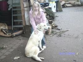 Foto 2 versch. Hunde aus Tötungsstation suchen Zuhause