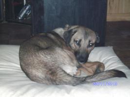 Foto 5 versch. Hunde aus Tötungsstation suchen Zuhause
