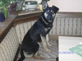 Foto 6 versch. Hunde aus Tötungsstation suchen Zuhause