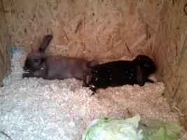 Foto 5 verschiedene kaninchen rassen