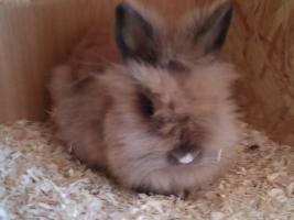 Foto 6 verschiedene kaninchen rassen
