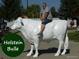Foto 5 wann kaufst Du Dir mal einen Deko Stier oder so einen Deko Bulle lebensgroß ...?