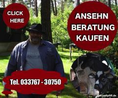 Foto 2 warum kaufen schweizer kunden gern zb. deko kuh lebensgroß …?