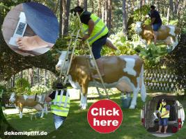Foto 2 was du hast noch keine simmentaler deko melk kuh lebensgross …?