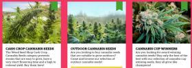 we make Cannabis Growers happy Marihuana Hanf Marijuana Hemp Seeds