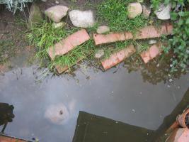 Foto 6 wir , eine Familie aus Niedersachsen suchen eine oder zwei Landschildkröten