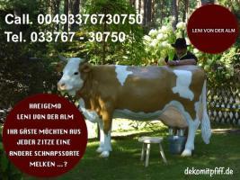 Foto 3 wo kaufst du deine deko kuh lebensgross …? hast schon mal bei www.dekokuh.de dich umgesehn ?