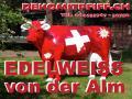 www.dekomitpfiffch  / Schweizer Deko Kuh lebensgross wann steht Sie in deinen Garten …?