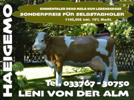 Foto 4 www.dekopferdvermietung.de Kann man da ein Deko Pferd lebensgroß mieten ???