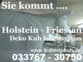 www.holsteinkuh.de - anklicken wenn Sie ne Deko Holstein Kuh wolln ....