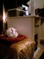 zwei Kaninchen PLUS Zubehör für 50,00 €